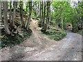 NO2506 : Path past Lomondside Cottage, Falkland by Bill Kasman