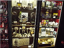 TQ3483 : View of the shop display in the Viktor Wynd Museum of Curiosities by Robert Lamb