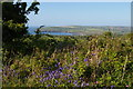 SN0337 : Hedgerow and view towards Newport Bay from below Penyparc by Christopher Hilton