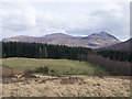NN3480 : Coniferous plantation in Glen Spean by Trevor Littlewood