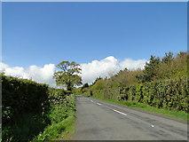TG0604 : Dereham Road near Danemoor Green by Adrian S Pye