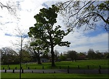 SD6911 : Moss Bank Park by Philip Platt