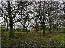 SD6911 : Wooded glade by Philip Platt