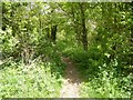 SP2245 : Former railway trackbed by Philip Halling