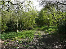 SE1025 : Path into Cunnery Wood Nature Reserve, Halifax by Humphrey Bolton