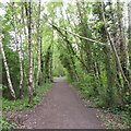 SK5446 : Broken birch by David Lally