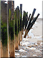 TA4213 : Groyne Posts on Spurn Point Beach by Andy Beecroft