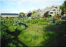 TL4658 : New Street Allotment Site by Richard Sutcliffe
