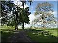 SP2642 : Parkland, Honington Hall by Philip Halling