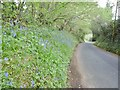 SY9694 : Lytchett Minster, bluebells by Mike Faherty