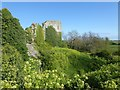 TQ6404 : Pevensey Castle - Verdant growth in the moat by Rob Farrow