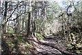 NS3923 : Cutting, Cutting Wood by Richard Webb