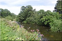 NT5675 : River Tyne by Richard Webb