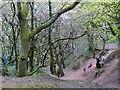 ST1582 : Coed y Wenallt, Cardiff by Robin Drayton