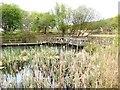 TM4767 : Dipping pond, RSPB Minsmere by Oliver Dixon