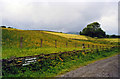 NY9623 : Site of Mickleton station, 2003 by Ben Brooksbank