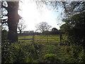SP3383 : Field off Burbages Lane by Niki Walton