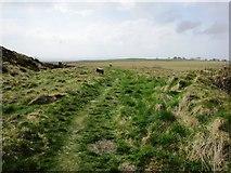 NO2305 : Path to limekilns, Lomond hills by Bill Kasman
