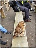 TM1459 : Suffolk Owl Sanctuary by Oliver Dixon