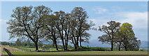 NH5857 : Outliers of Drummondreach Oak Wood by Julian Paren