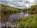 NH6956 : Small Lochan in Arkendeith Wood by valenta