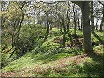 NH5857 : Beside the Sacrament Burn, Drummondreach Oak Wood by Julian Paren