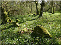 NH5857 : Part of the Hut Circle II, Drummondreach Oak WoodI by Julian Paren