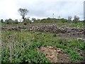 SH9974 : Felled woodland near Glascoed by Christine Johnstone