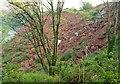 SX9266 : Debris and landslip above Oddicombe by Derek Harper