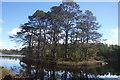 SD3688 : Pine Clad Island by Michael Graham