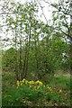 TL9328 : Cowslips in Wren Wood by Glyn Baker