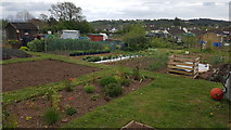 ST0107 : Cullompton : Allotments by Lewis Clarke