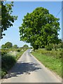 SO5470 : Oak tree beside a country road by Philip Halling