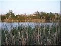 NZ2674 : Annitsford pond by brian clark