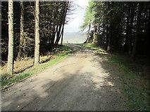 NO2105 : Track to Harperleas Reservoir, Lomond Hills by Bill Kasman