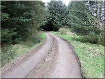 NO2105 : Track past Harperleas Reservoir, Lomond Hills by Bill Kasman