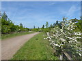TQ5690 : Path in Harold Court Woods by Marathon