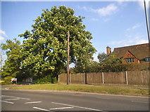 TQ1463 : Milbourne Lane, Esher by David Howard