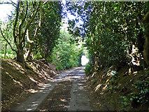 TL2026 : Sunken lane near The Wyck by Robin Webster
