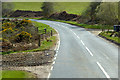 NH9051 : A939 near Greens Nurseries by David Dixon
