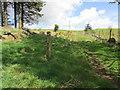 NO2304 : Path on Lomond Hills by Bill Kasman