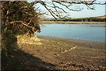 SW9873 : River cliff by the Camel Trail by Derek Harper