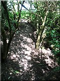 TG3204 : Scramble across a drainage ditch by Evelyn Simak