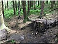 SS9293 : Mountain Bike Ramp by Alan Hughes