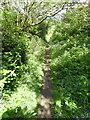 TQ4901 : Footpath near The Comp by PAUL FARMER
