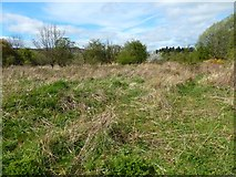 NS3977 : Rough ground near the River Leven by Lairich Rig