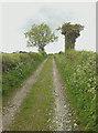 SU7316 : Byway to Chalton by Hugh Craddock
