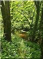SX7354 : River Avon at Garaland Copse by Derek Harper
