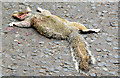 J3774 : Dead squirrel, Ballyhackamore, Belfast (May 2017) by Albert Bridge