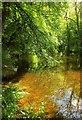 SX7353 : River Avon by Derek Harper